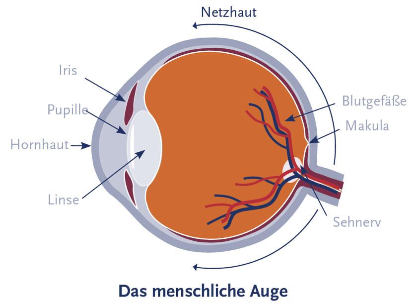 Netzhaut des menschlichen Auges